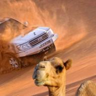desertsafari